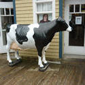 6758   Large plastic model of a dairy cow