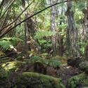 5486   hawaiian tropical plants