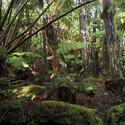 5487   hawaiian rainforest vegetation