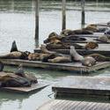 5605   fishermans wharf seals