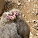 5966   love monkeys