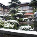 6136   tokyo winter