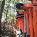 6137   line of torii gates