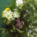 6151   wild flowers