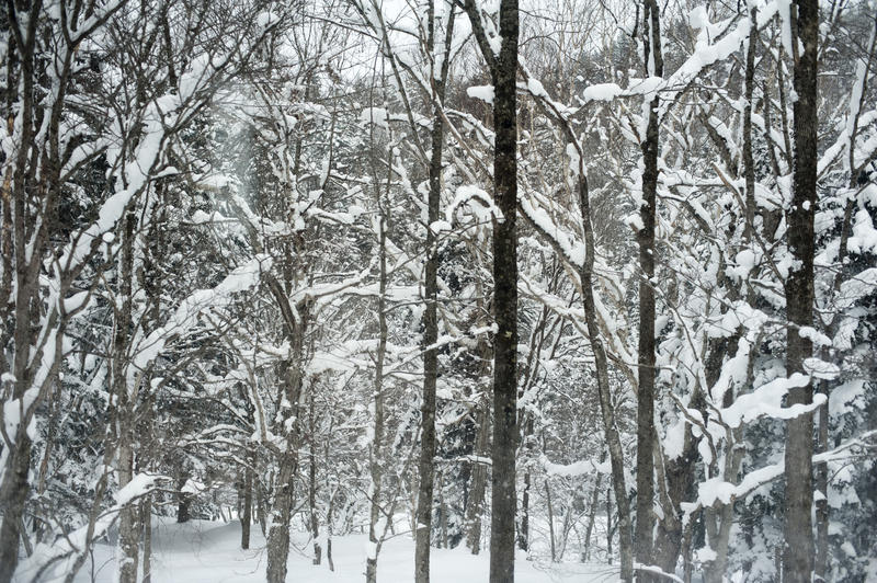 background image of snow fallen on trees in a woodland
