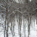 5988   woodland snow scene
