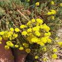 6540   yellow flowers