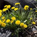 7232   yellow flowers 0