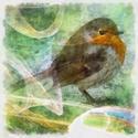 8989   abstract robin