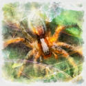 8990   abstract spider