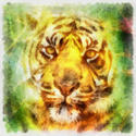 8993   abstract tiger