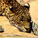 8249   Cat Nap