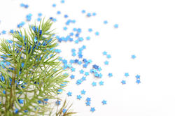 10566   Christmas Backdrop   Fir Branch with Blue Stars