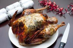 8642   Appetizing crispy brown roast Christmas turkey