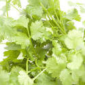 8418   Bunch of fresh coriander