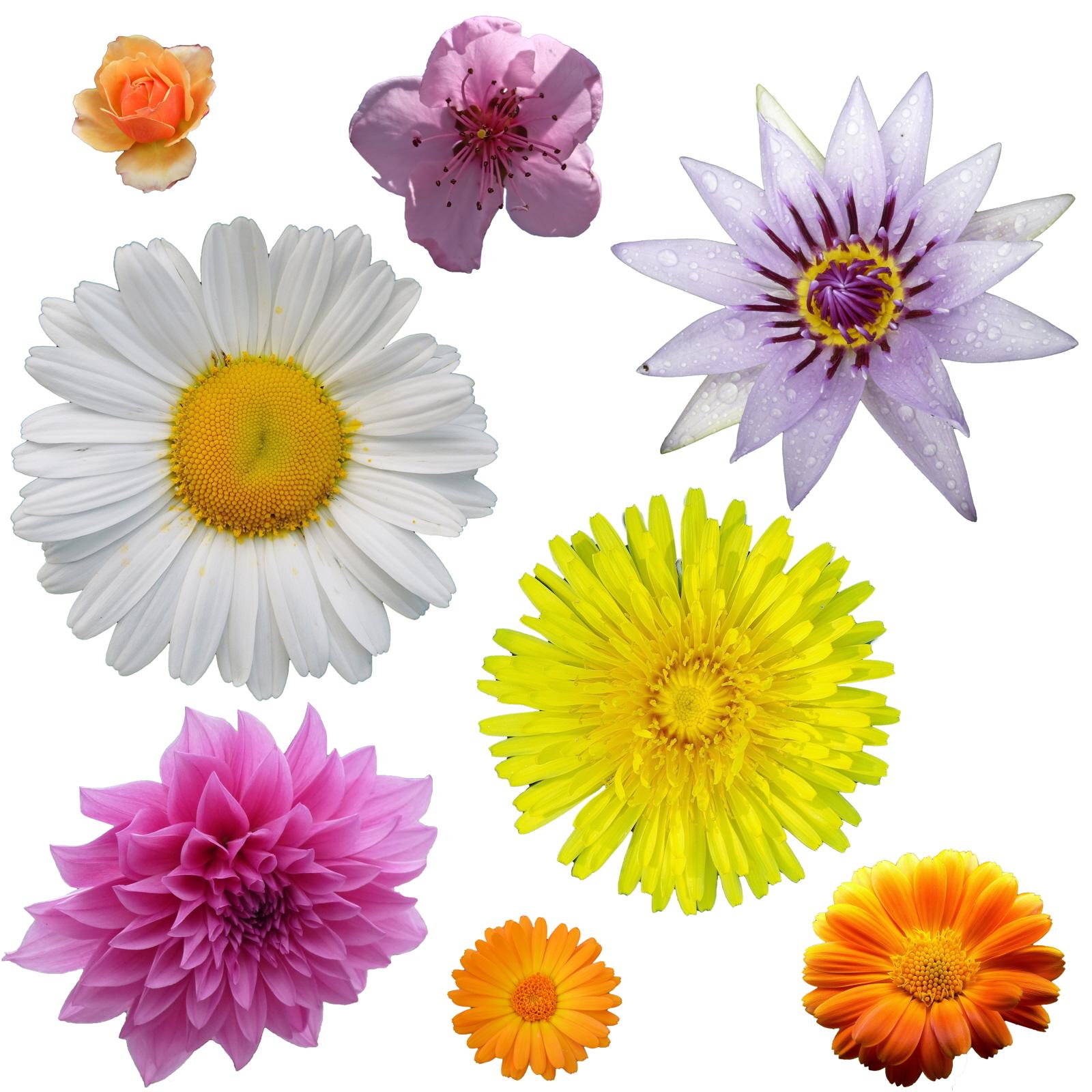 Daisy Flower Craft For Preschool