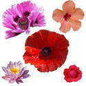 9079   cutout public domain flowers004