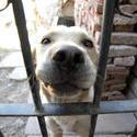 10326   dog fence 01