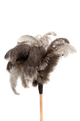 10741   Feather Duster Isolated on White Background