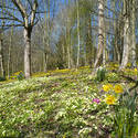 7882   Eastertime woodland flowers