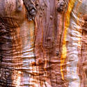 10300   eucalyptus bark