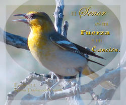 11198   Fueerza y Cancion