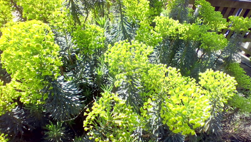 <p>Green Shrubs on a sunny day</p>