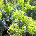11054   Green shrubs