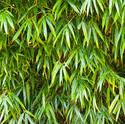 8320   Bamboo Barrier