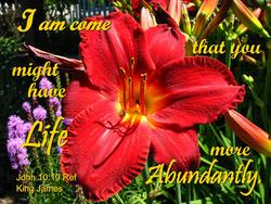 11763   Life Abundant