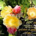11051   Light Shining