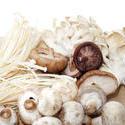8443   Variety of fresh edible fungi