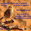 10716   Ni Un Pajarillo Solo Cae