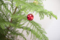 8670   Bauble hanging on the branch of a Christmas tree