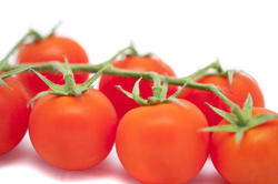 10623   Healthy Fresh Red Tomatoes on a Stem