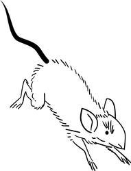 11018   running rat