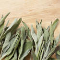 8467   Fresh leaves of sage