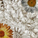 9107   shabby floral background
