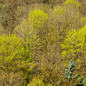 8259   Splashes of Yellow