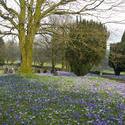 7883   Spring flowers in country graveyard