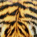 8997   tiger fur painting