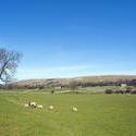 7763   Wensleydale, Yorkshire Dales