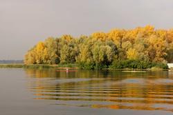 11065   yellowed trees