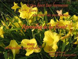 16924   Aprendan de las Flores