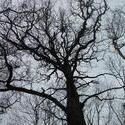 12427   backlit tree 1