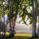 12005   birches gateway