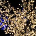16802   christmas lights 2free