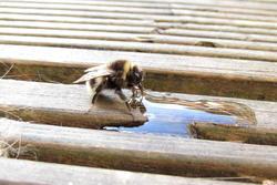 13070   close bee