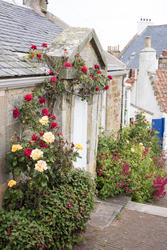 12907   Quaint stone cottage with climbing roses