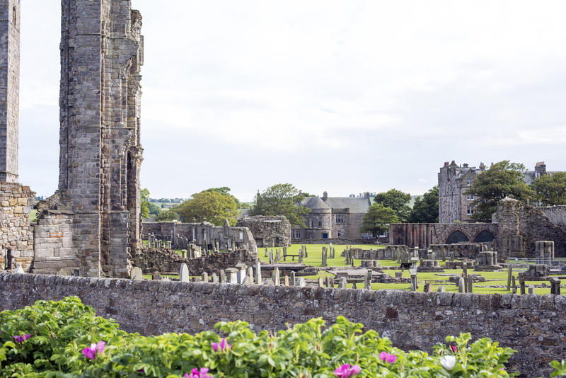 Flowering shrubs near graveyard in the old ruins of Saint Andrews Cathedral in Scotland